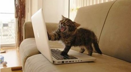angry-writer-cat