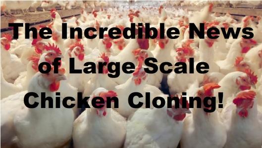 Chicken Cloning.jpg
